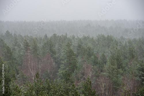 Spoed Foto op Canvas Khaki misty forest in winter. far horizon