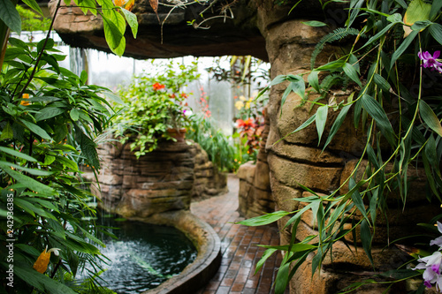 Tropical plants in a public garden and conservatory