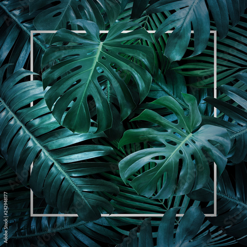 Summer tropical leaves on black background Canvas Print