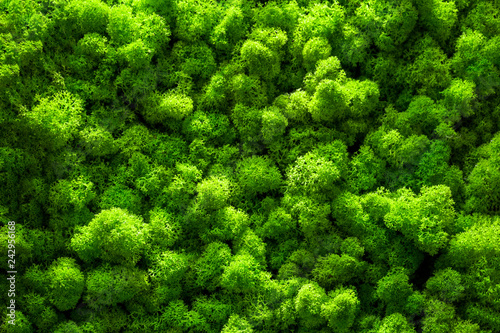 Fotografia, Obraz Green moss backgruond close up interior design. top view close up