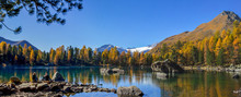 Panorama View At The Afternoon Sunset  Hous At The Lake Saoseo With Yellow Larch Trees In Fall Season, Canton Grison, Switzerland