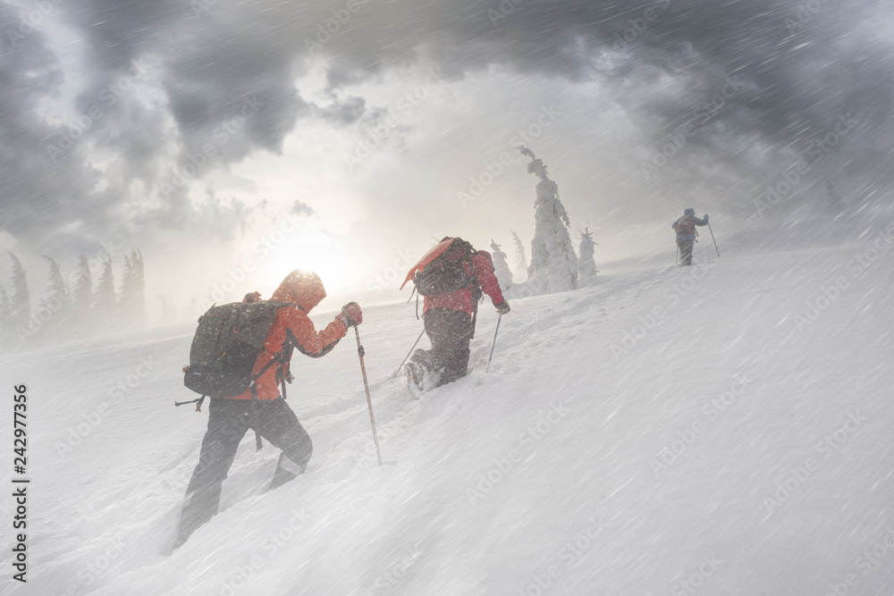 Fototapety, obrazy: climbers in mountain snowfall