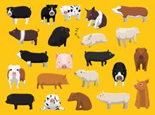 Various Pig Breeds Poses Carto...