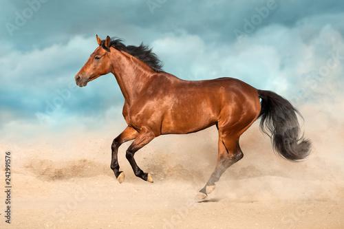 Poster de jardin Desert de sable Bay horse run gallop in desert sand