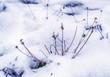 odwilż i topniejący śnieg