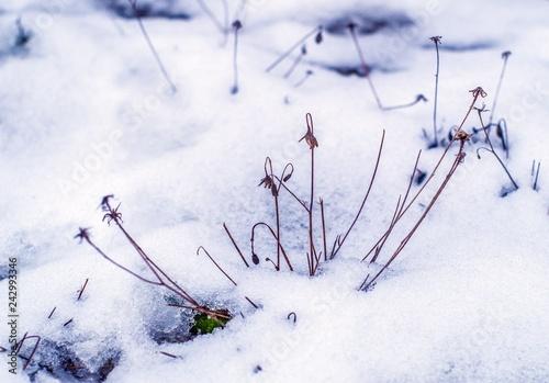 Fototapeta odwilż i topniejący śnieg obraz