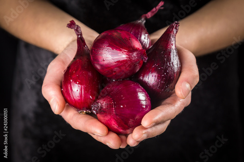 Wet red onion bulbs in woman hands