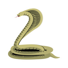 Poisonous Cobra Serpent