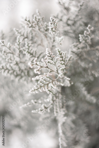 Fototapety, obrazy: Close up of frozen beauty of nature in winter time. Vertical type of photo.