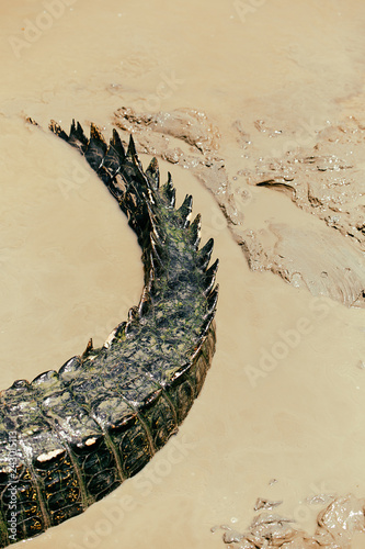 Fotografie, Obraz  crocodile tail, australia