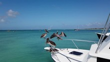 A Squadron Of Pelicans Balancing On The Railing Of A Small Boat On A Beautiful, Calm Caribbean Blue Green Ocean. One Pelican Poops On The Deck.