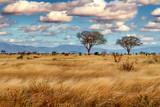 Fototapeta Sawanna - Afrika