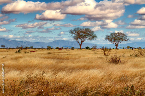 Afrika © Peter