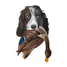 English Springer Spaniel Dog