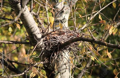Valokuva  convolute nest on tree