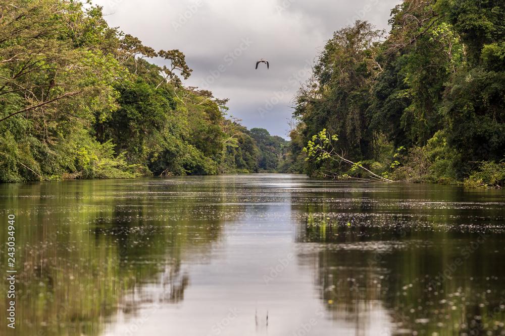 Fototapeta Pacaya Samiria National Reserve