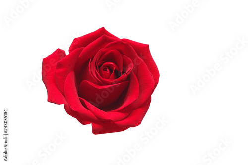 Fototapety, obrazy: Red rose isolated on white background. Valentines Day concept
