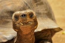 A Close Up Of A Tortoise Head