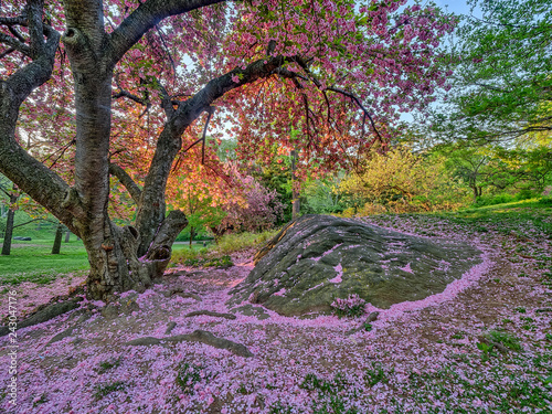 Foto op Canvas Weg in bos Central Park, New York City in spring