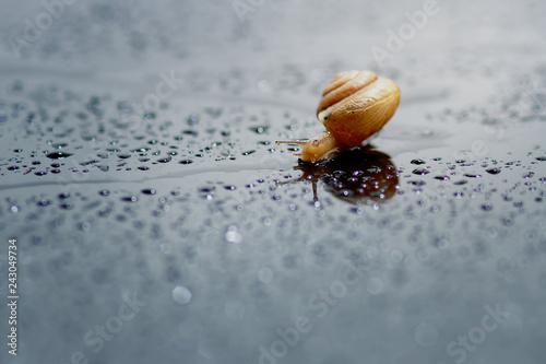 snail, snail is walking in the rain