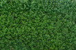 Grüne Hecke als Hintergrund - Textur