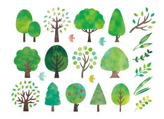 水彩の木と葉色々