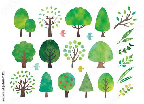Foto  水彩の木と葉色々
