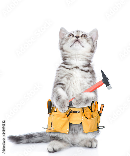 Fotografía  Funny cat worker with toolbelt and hammer looking up