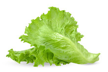 Lettuce Isolated On White With...