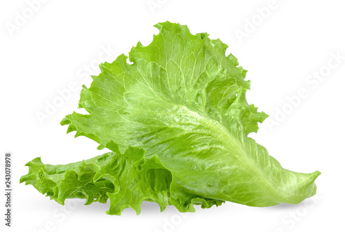 Fototapeta Lettuce isolated on white with clipping path obraz
