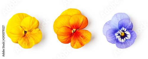 Canvas Prints Pansies Spring pansy viola tricolor flowers set.