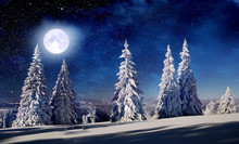 Spruce Trees In The Winter At Full Moon
