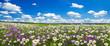 Leinwandbild Motiv spring landscape panorama with flowering flowers on meadow
