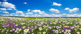 Fototapeta Kwiaty - spring landscape panorama with flowering flowers on meadow