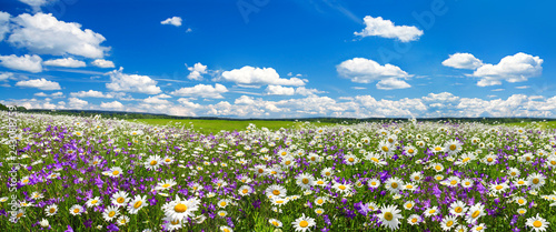 Foto auf Gartenposter Landschaft spring landscape panorama with flowering flowers on meadow
