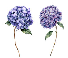 Watercolor Blue Hydrangea Set. Hand Painted Flowers With Leaves And Branch Isolated On White Background.  Nature Botanical Illustration For Design, Print. Realistic Delicate Plant.
