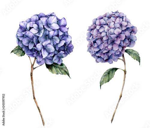 Canvas Print Watercolor blue hydrangea set