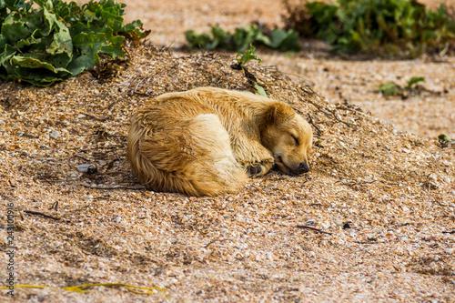 Foto  mongrel dog on the beach