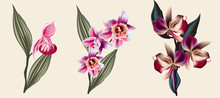 Collection Of Vector Tropical ...