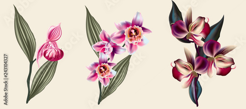 Cuadros en Lienzo Collection of vector tropical flowers for design