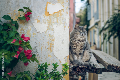 Photographie  funny sleeping fluffy street cat in street urban environment with composition of