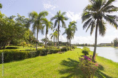 Fotografija  public park and pond and palm tree