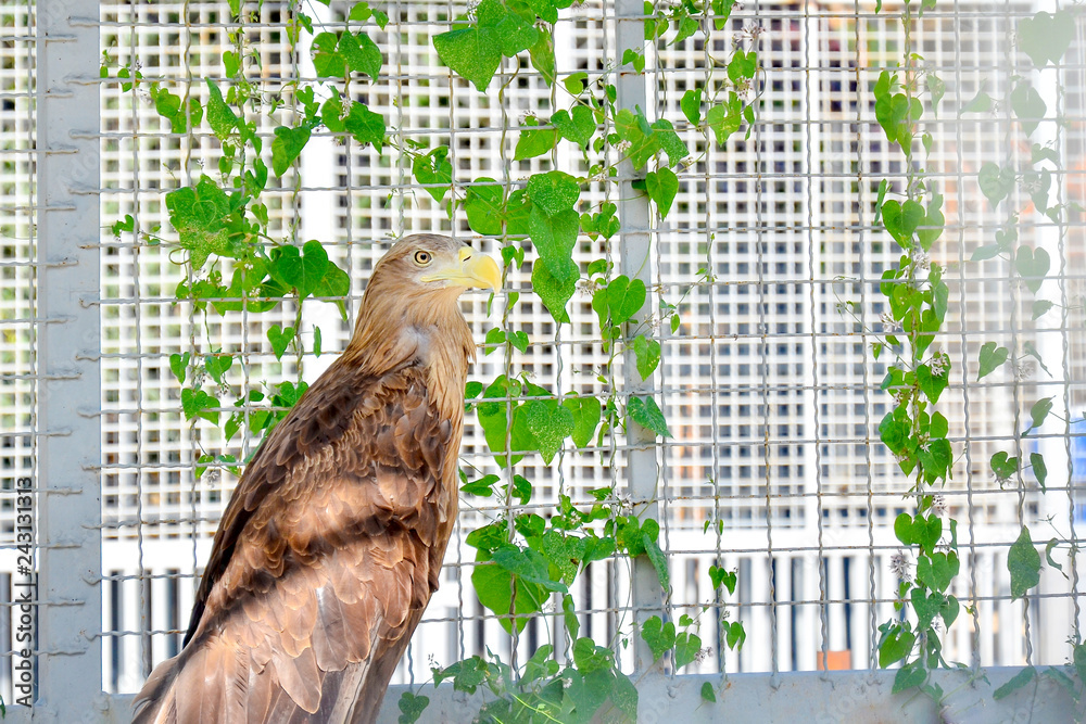 Light brown eagle on a background of green plants.