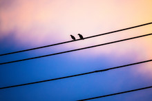 Sunset Sky,Bird Sitting On Electric Wire A Have Sunset Sky Background.Thailand.