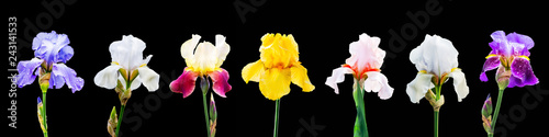 Photo Stands Iris A set of images of multicolored iris flowers on a black isolated background_