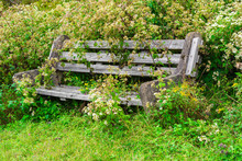 Wood Bench Overgrown With Plants
