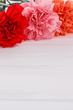 Red, Pink And Orange Carnation, Close Up. White Wood Background. Copyspace.