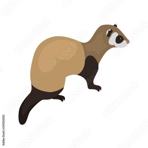 Fotografering animal flat color ferret icon