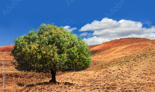 Photo Lonely green argan tree in the middle of the desolating valley in Morocco
