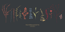 Vector Silhouettes Collection....